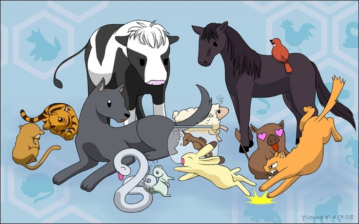 C'est l'histoire de 13 membres d'une famille hantés par l'esprit d'un animal. Une jeune fille tente de lever cette malédiction.