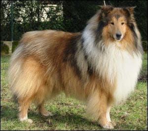 Quelle est cette race de chien?