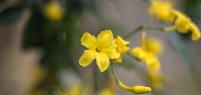 Retrouvez le nom de cet arbuste caduc !