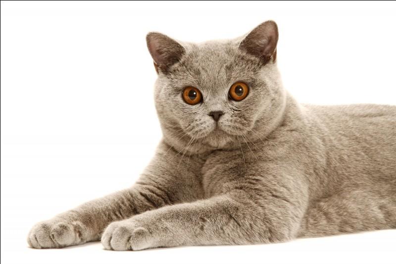 Quel est le poids approximatif du chat ?