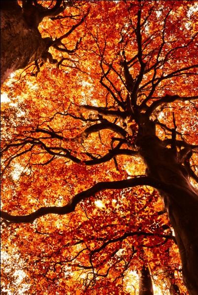 Tu vois un arbre majestueux, qui a certainement plus de cent ans. Que penses-tu ?