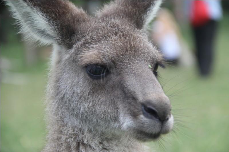 Que lisent les kangourous ?