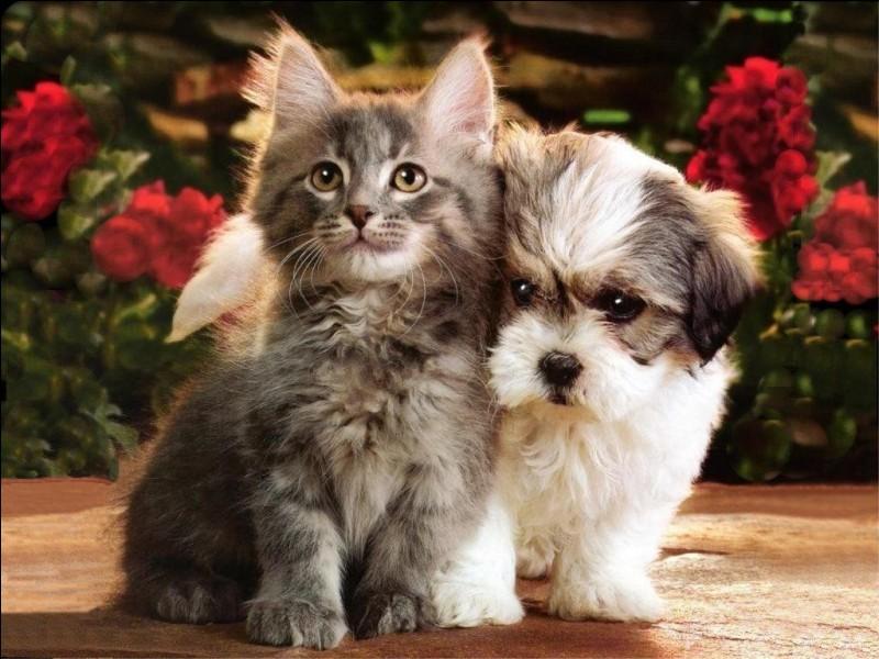 Que penses-tu des chats ?