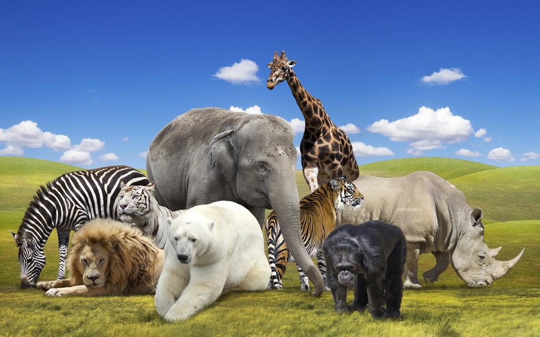 Quel animal es-tu ?