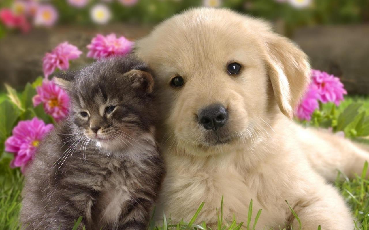 Es-tu de caractère chien ou chat ?