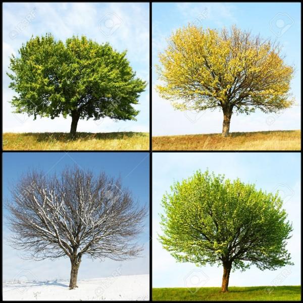 Quelle saison aimes-tu le plus ?