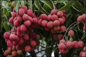 Plante malodorante utilisée autrefois pour chasser les punaises :