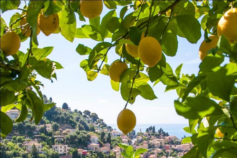 Quelle ville du département des Alpes-Maritimes est située à la frontière italienne au niveau de Vintimille, la ville frontière du côté italien ?