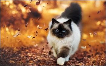 """Qu'est-ce qu'un """"chat à neuf queues"""" ?"""