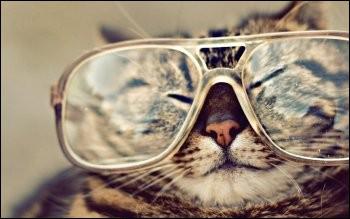 Le Chat est le nom d'une constellation. Vrai ou faux ?