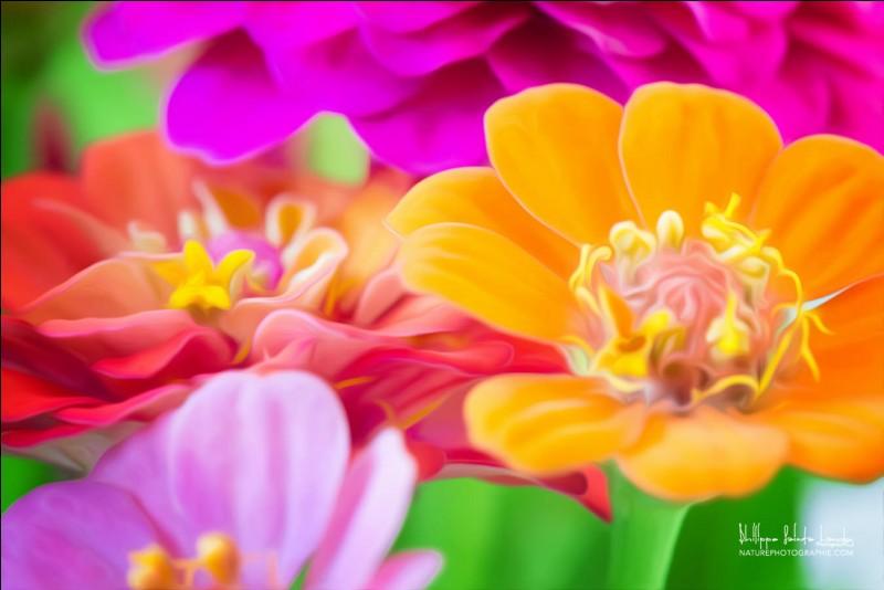 Quelle fleur a donné son nom à un trouble de la personnalité caractérisé par l'admiration de soi-même ?