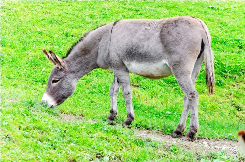 Quel est le nom du mâle né du croisement d'un âne et d'une jument ?