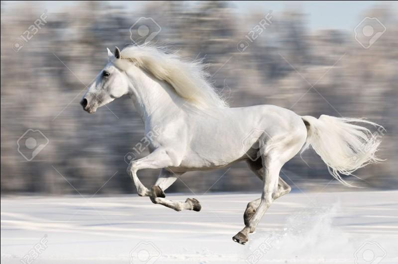 Tu préfères les chevaux...