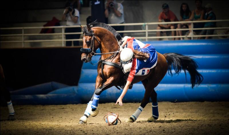 Quel sport pratique ce beau cheval avec son cavalier ?