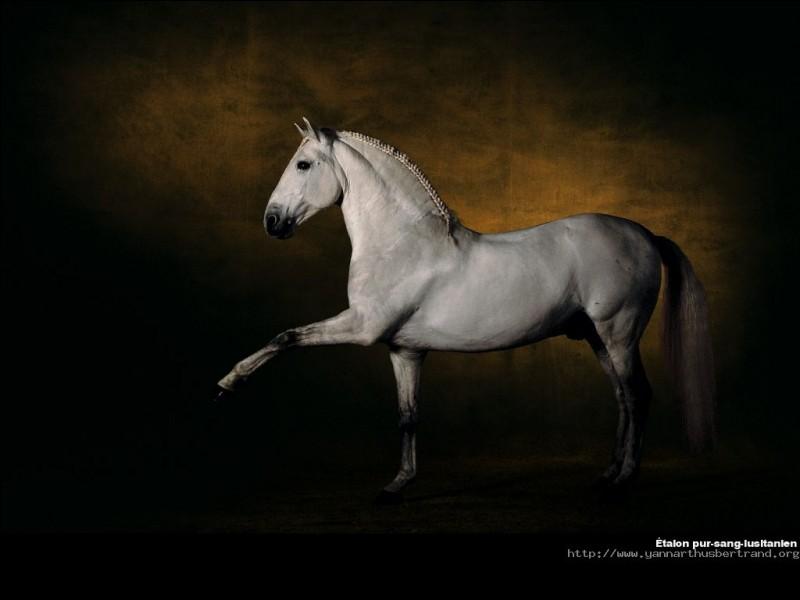 Quelle figure de dressage haute école ce cheval pratique-t-il ?