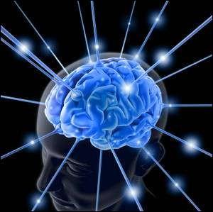 """Vrai ou faux ?Le cerveau est appelé """"encéphale"""" pour les humains."""