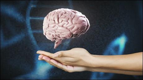 Vrai ou faux ?Le cerveau se trouve dans la tête des chats.