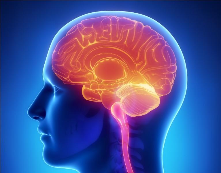 Vrai ou faux ?Une information partie du côté droit du cerveau concerne le côté gauche du corps.