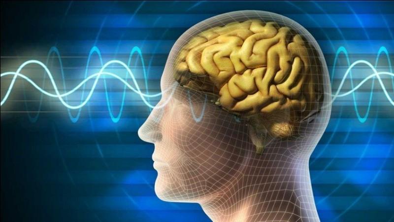 Vrai ou faux ?Il vous sera impossible de trouver de l'acétylcholine dans votre cerveau.