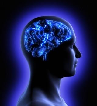 Vrai ou faux - Le cerveau