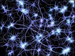 Comment se nomme la cellule excitable constituant l'unité fonctionnelle de base du système nerveux cérébral ?