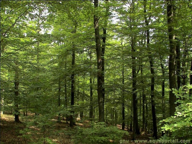 Coupes-tu les arbres ?
