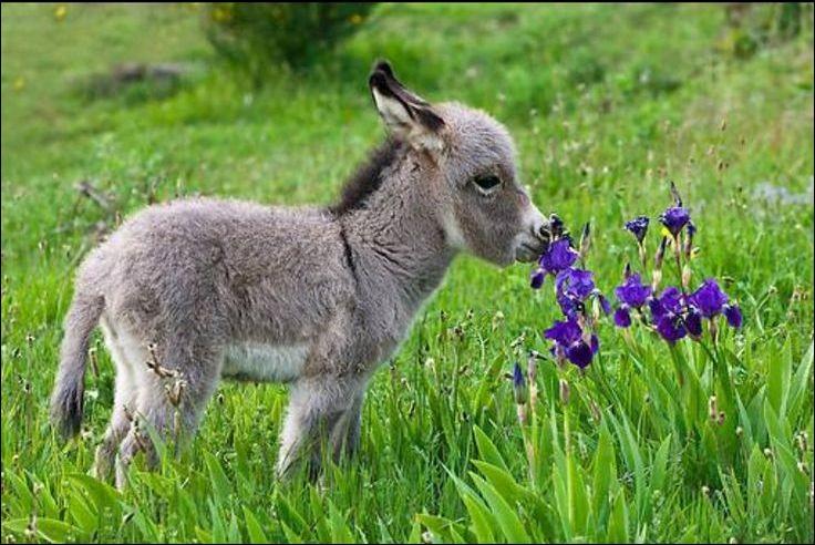 Quel animal peut être un bouquet ?
