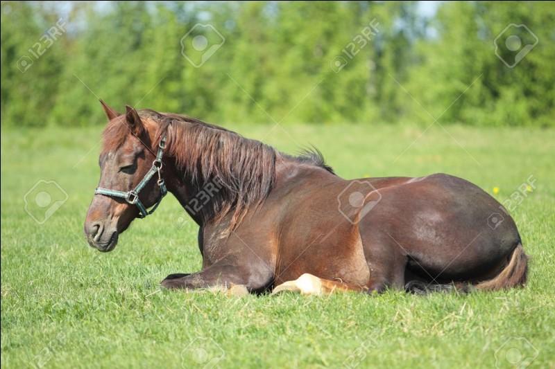 Où dort le cheval ?