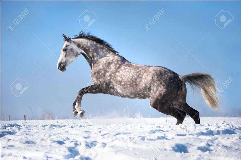 Comment s'appellent les niveaux d'équitation traditionnelle ?