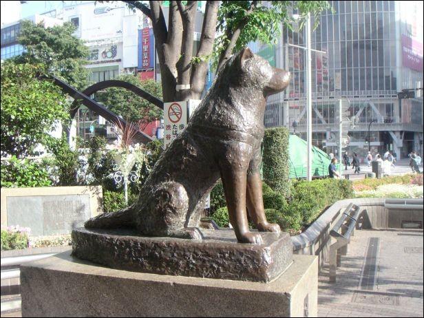 Un de mes ancêtres a attendu à la gare de Shibuya quotidiennement pendant 10 ans son maître décédé :