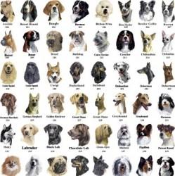 Un indice, une race de chien