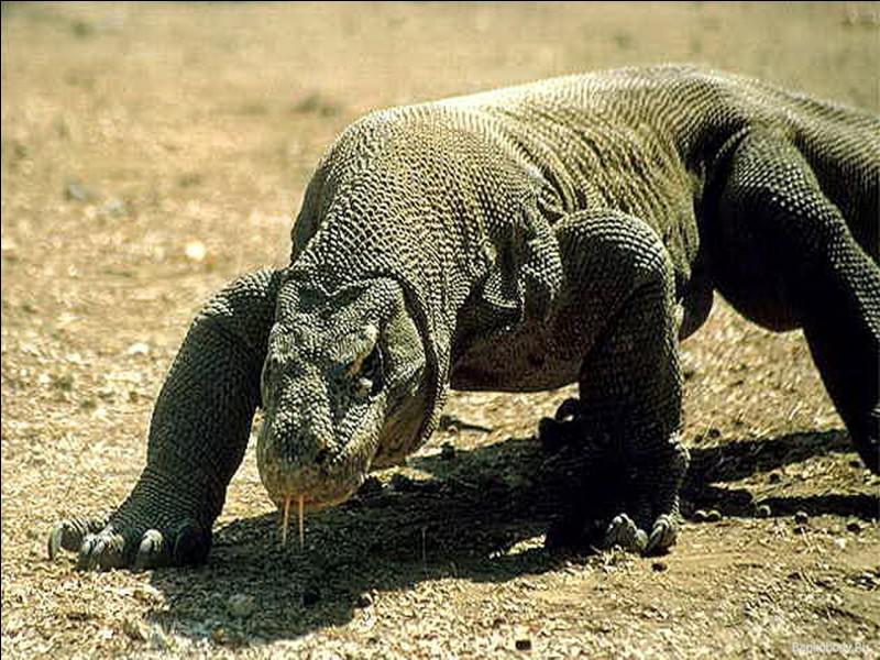Quel est ce reptile ?