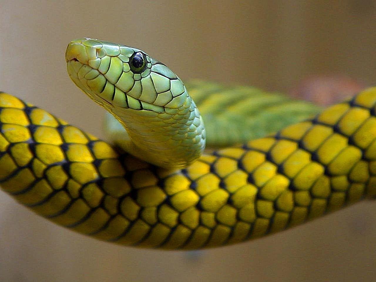 Saurez-vous reconnaître ces reptiles ?