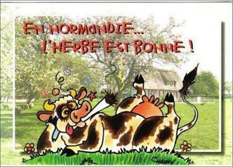 """N - Dans une chanson de Gérard Blanchard, une vache déracinée voulait revoir sa """"Normandie""""."""