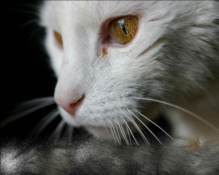 Quel est le nom de chaton d'Étoile de Jais ?