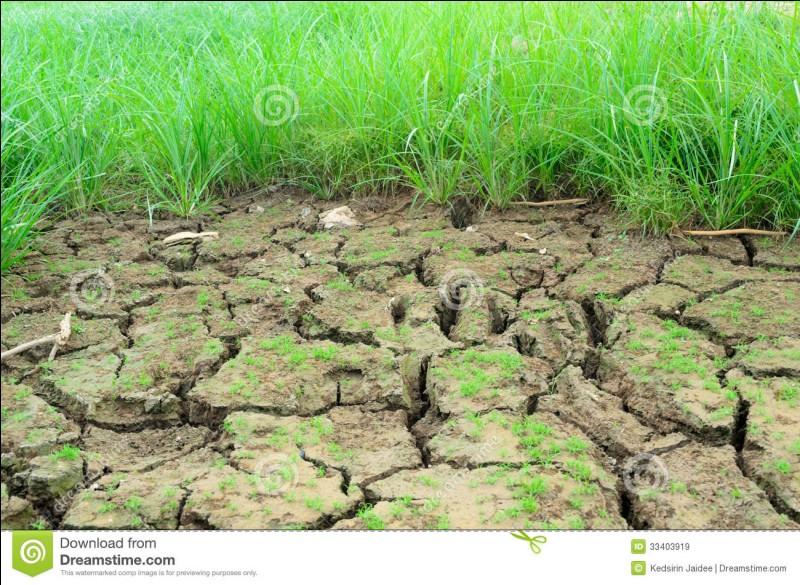 Comment appelle-t-on l'étude scientifique des sols ?