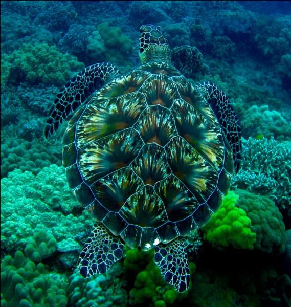 Il plonge dans la piscine d'un complexe touristique et tombe sur une tortue :