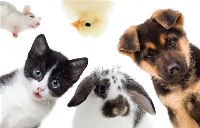 Choisis un animal domestique.