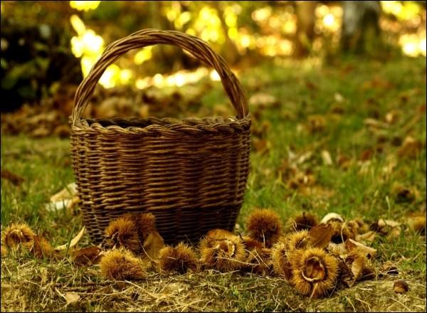 Lequel de ces travaux agricoles ne se fait pas à l'automne ?