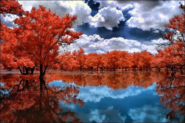 """Lequel de ces artistes, qui étudia le piano au conservatoire de Moscou, chantait """"Et quand finit l'indifférence, passe l'automne vienne l'hiver et que la chanson de Prévert, cette chanson """"les feuilles mortes"""" s'efface dans mon souvenir"""" ?"""