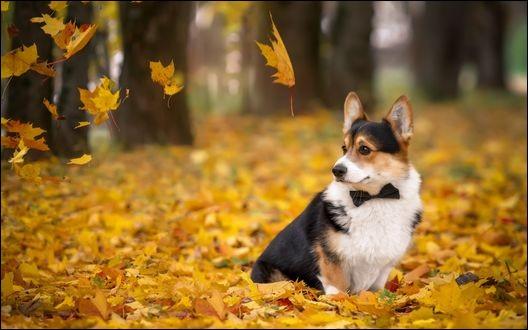 """Qui chantait """"Quand revient le vent de l'automne, je pense à tout ce temps perdu, je n'ai fait de mal à personne...."""" ?"""