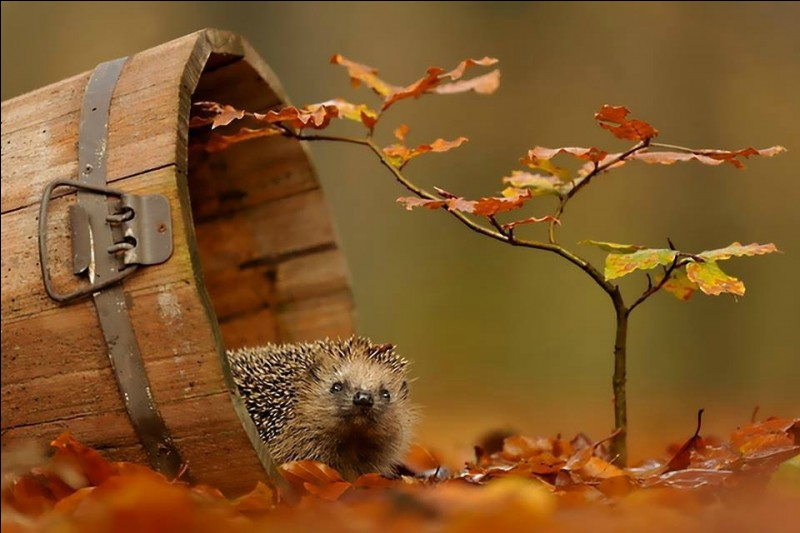 """Qui chantait """" Restera-t-il encore quelque chose de nous lorsque les feuilles d''automne recouvriront l'été rassemblant tous les hommes devant leurs cheminées"""" ?"""