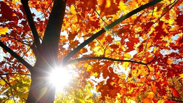 L'automne en culture générale