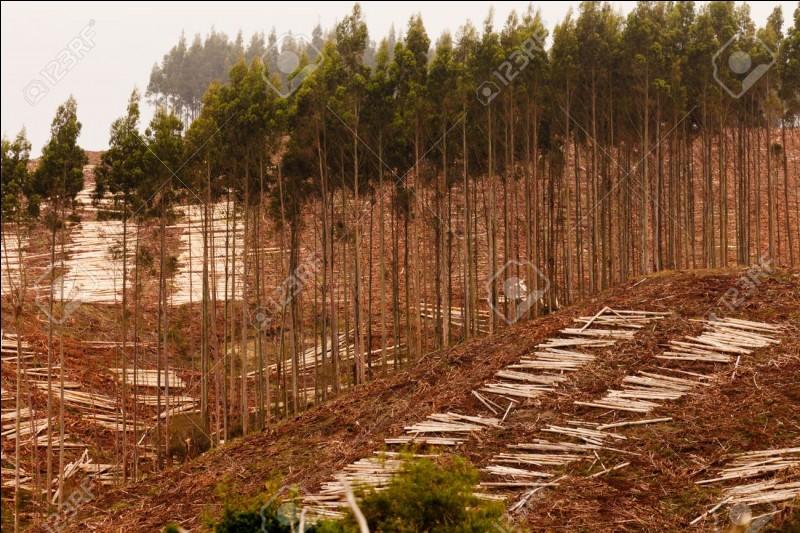 Ecologie : On s'est rendu compte que si on continuait à perdre des arbres ...