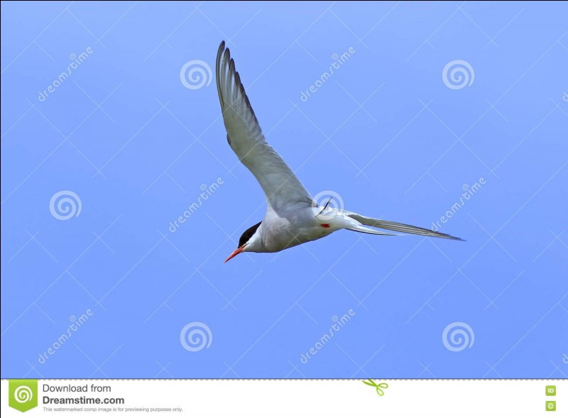 Un oiseau migrateur ...