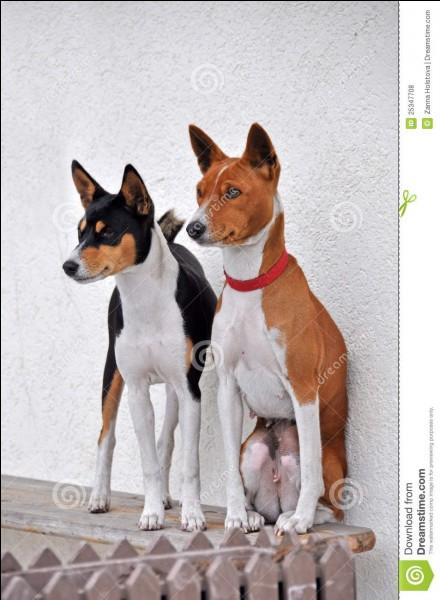 Quelle est la race de ces deux chiens ?