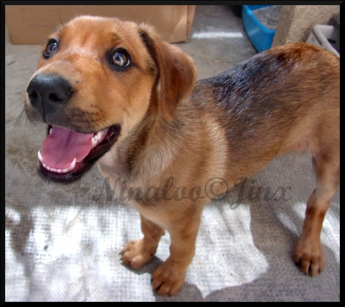 Sais-tu à quelle race appartient ce chien ?