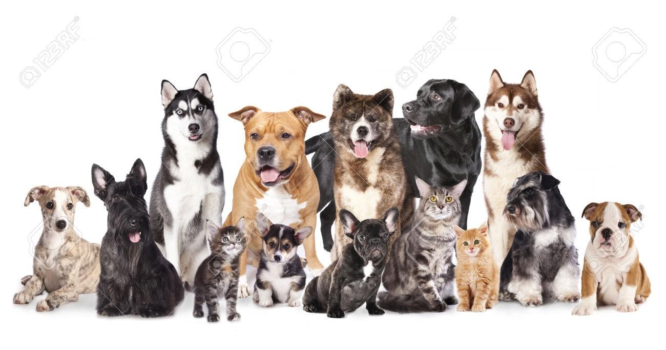 Les races de chien : les connais-tu bien?