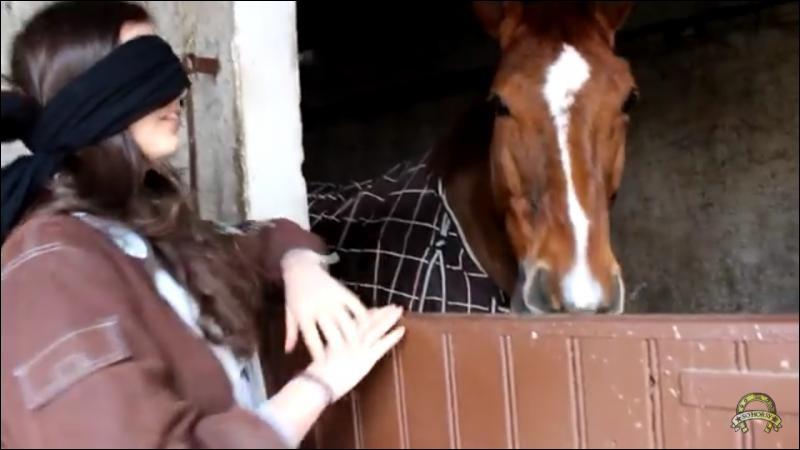 Quel est ce cheval ?