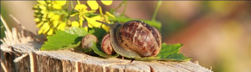Quel nom désigne la bave qui permet à l'escargot de se déplacer en glissant ?